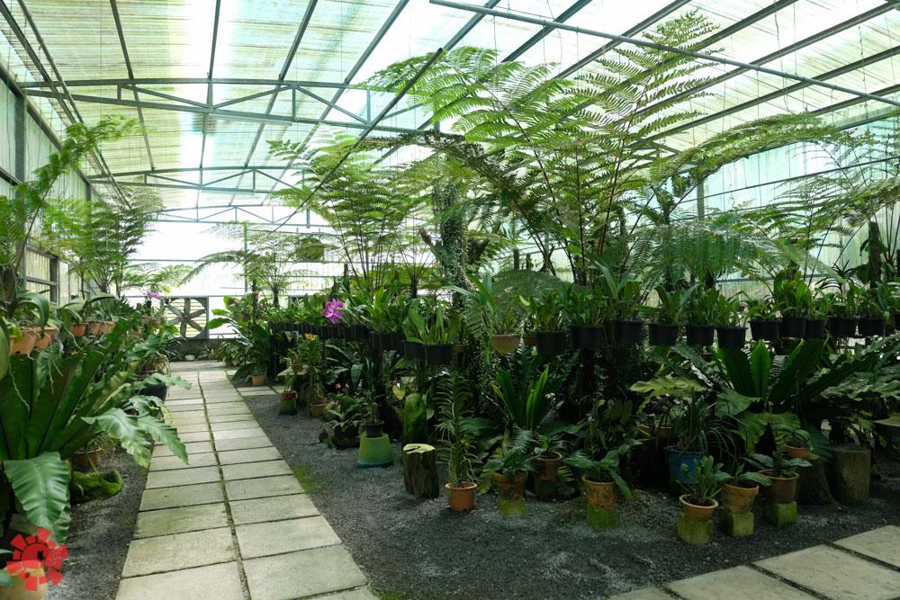 Kinh nghiệm du lịch khám phá Kuching